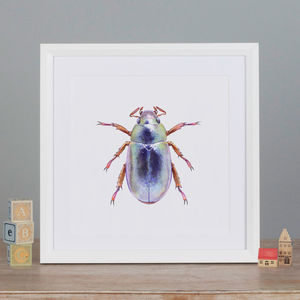 Illustrated Silver Chafer Beetle
