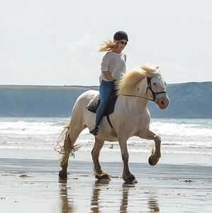 Beach Horse Riding Experience For One