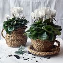 Unusual Rattan Woven Cup, Saucer And Jug Planter Set