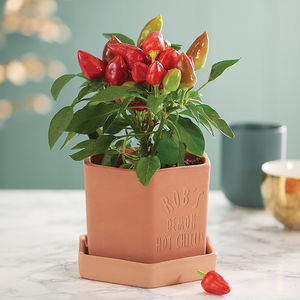 Hexagonal Engraved Chilli Pot - gifts for him