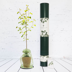 Silver Birch Tree Of New Beginnings Gift - 25th anniversary: silver