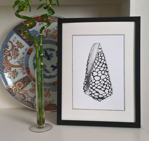 Framed Limited Edition Marble Cone Shell Giclee Print