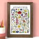 Wildflowers Of Britain Wildlife Watercolour Print