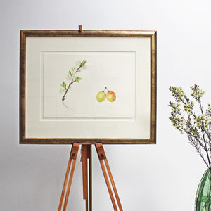 Botanical Watercolour With Plum Illustration