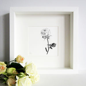 Rose Print - drawings & illustrations