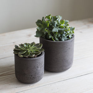 Cement Plant Pot Set