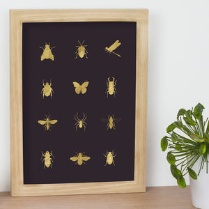 Insect Diagram Print