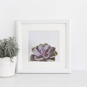 Purple Succulent Botanical Photographic Print
