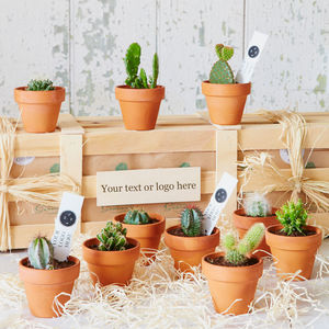 Personalised Corporate Cactus Collection