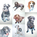 Personalised Pet Portrait Drawing