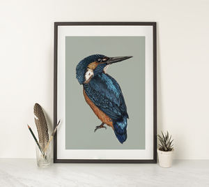 Kingfisher Illustration Print - animals & wildlife
