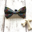 Bright Star Dickie Bow