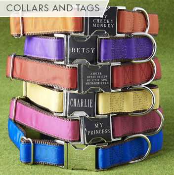 best collars & tags