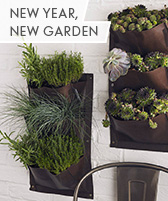 new year garden updates