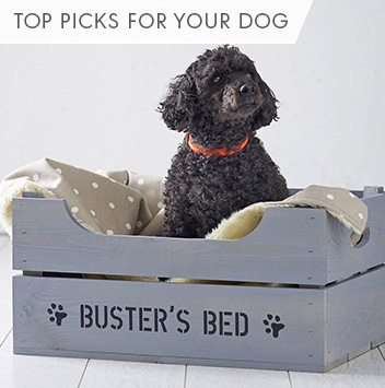 top picks for your dog