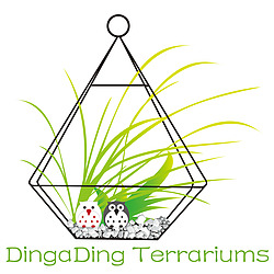 DingaDing Terrariums
