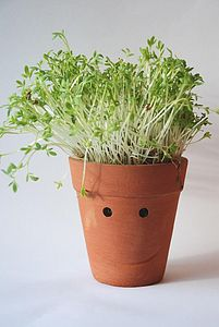 Cress Head Kit