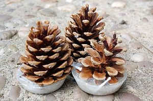 Bundle Of Kindle Cones - winter homeware