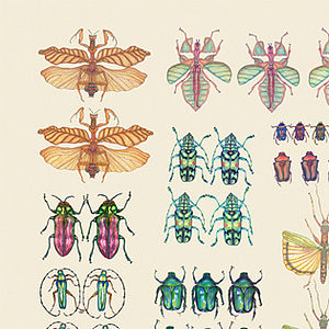 Insect Display: Card - blank cards