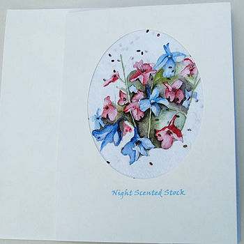 Night Scented Stock Seed Card