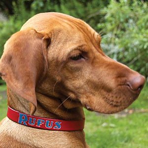 Personalised Name Leather Dog Collar - pet collars & leads
