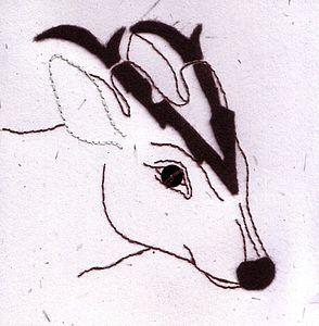 Muntjac Deer Card