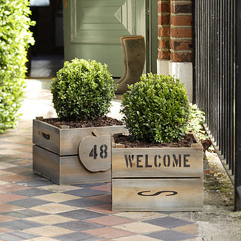Personalised Crate - Square Plantabox with Buxus Ball