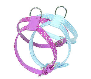Polka Dot Bones Harness - gifts for pets