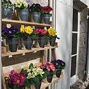 Zinc pots set off the colour