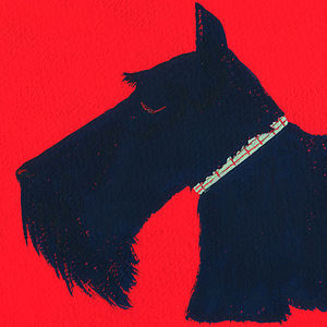 Monty the Scottish Terrier Fine Art Print - art & pictures