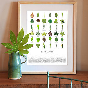 Latin Leaves Print - prints & art