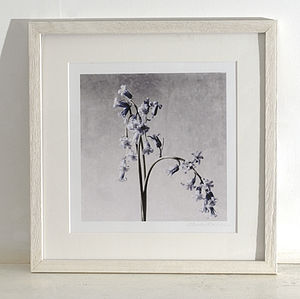 Bluebells Photograph - Three Sizes Available