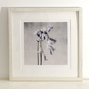 Bluebell Fine Art Print - Three Sizes