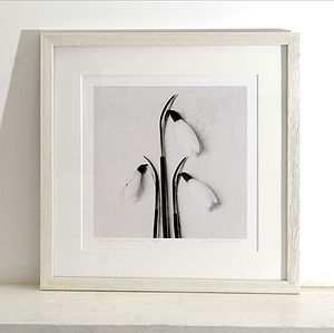 Snowdrops Fine Art Print - Three Sizes