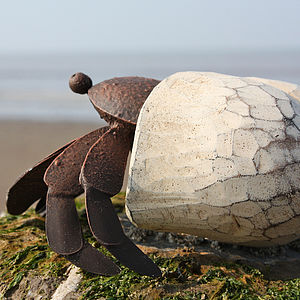 Painted Hermit Crab - art & decorations