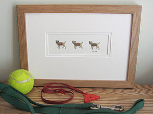 Border Terrier Picture - shop by price