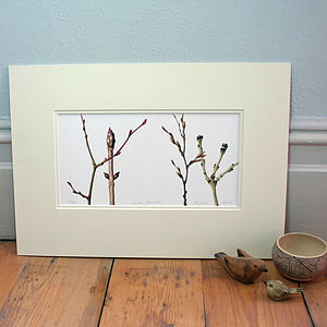 'Winter Branches' Limited Edition Print - contemporary art