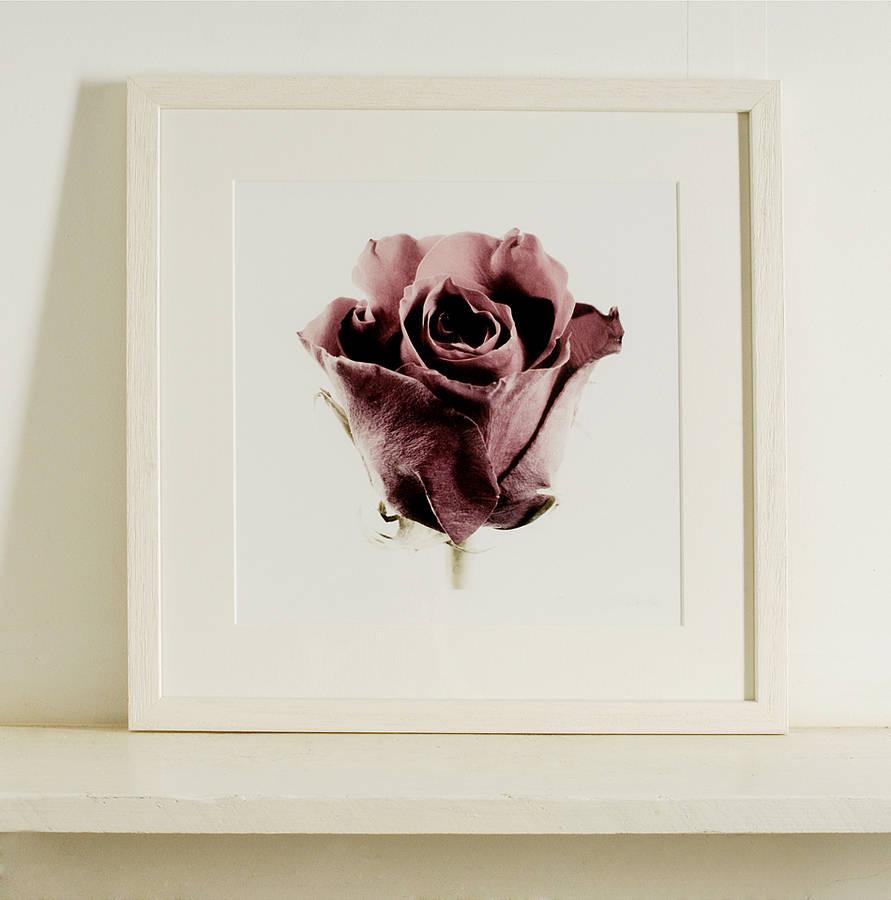 New Red Rose - Three Sizes