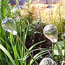 Blown Glass Seashell and Dewdrop Sculptures