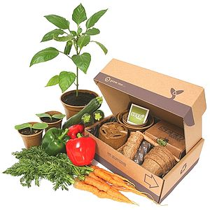 Jumbo Summer Allotment Starter Pack - potting shed essentials