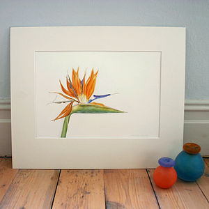 'Bird Of Paradise' Limited Edition Print - posters & prints