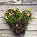 Spring - Fresh Tete A Tete Willow Heart
