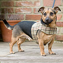 Soft Tweed Dog Harness
