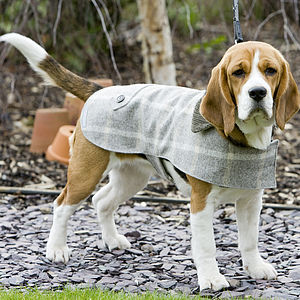 Slate Tweed Dog Coat - dogs