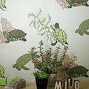 Turtle Turtle Wallpaper