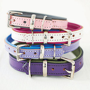 Padded Leather Dog Collar - pet accessories