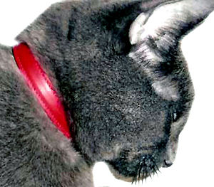 Cat Collars Handmade Calf Leather - cats