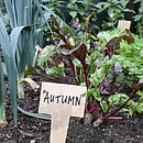 Autumn Veg Patch