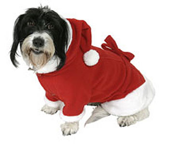 Doggy Santa Outifit