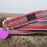 Scrufts Mivvi Striped Dog Collar And Lead - pets